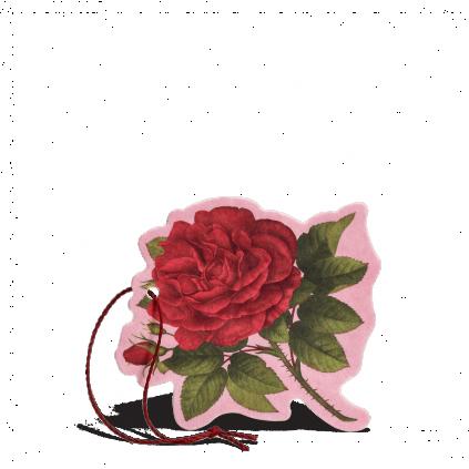 Rosa purpúrea Flor perfumada multiusos